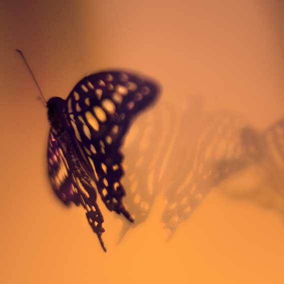 fotocursus-online-vlinder